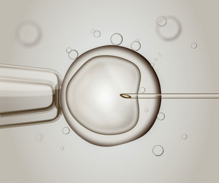 IVF or egg donation