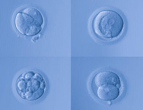 La clasificación de los embriones: qué es y cómo se realiza